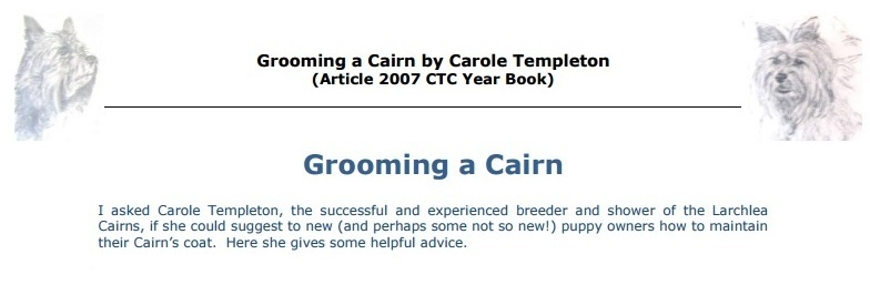 Grooming a Cairn