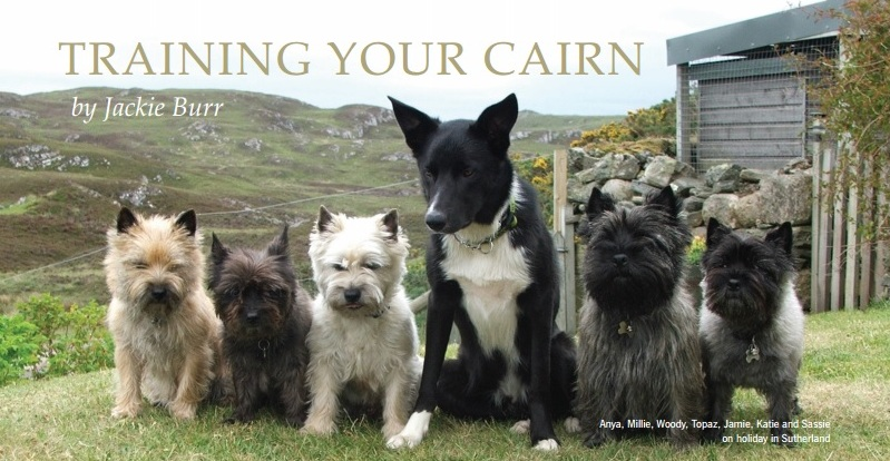 Training your Cairn by Jackie Burr